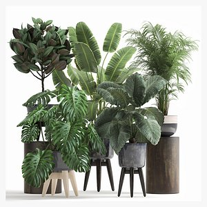 3D model Houseplants in a flowerpot for the interior 1023
