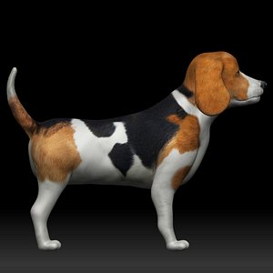 fully rigged low poly Beagle model