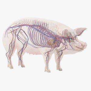 Pig Body Skeleton and Vascular System Static 3D model