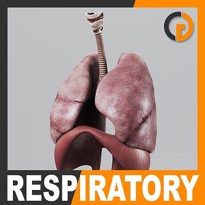 lightwave human respiratory diaphragm -