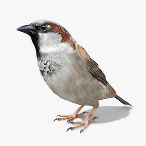 Sparrow model