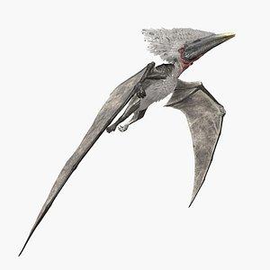 3D Pterodactyl model