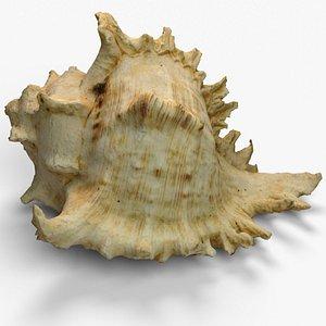 3D Big shell