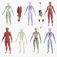 Male and Female Body Anatomy Collection