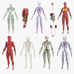 male female body anatomy 3D model