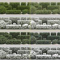60-60 Hedge Bushes