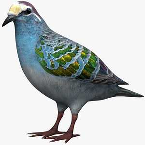 3D common bronzewing model