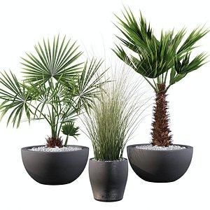 palm plant 3D model