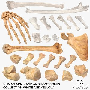 Human Arm Hand Foot and Scapula Bones Collection White and Yellow - 50 models 3D