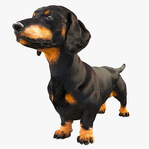 3D model dachshund dog