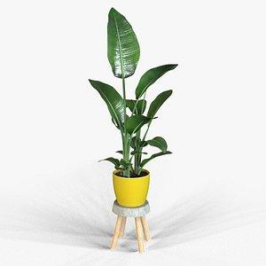 3D strelitzia plant pot