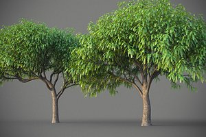 3D XfrogPlants South American Mesquite - Mesquite Rio Salado