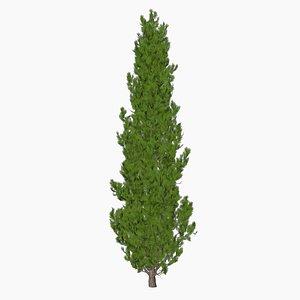 cypress tree 3D