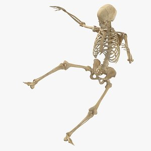 real human female skeleton 3D model