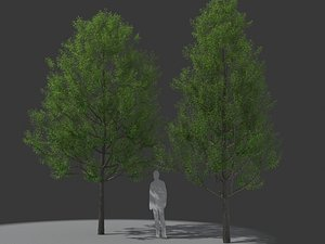 3D XfrogPlants Willow Oak - Quercus Phellos model