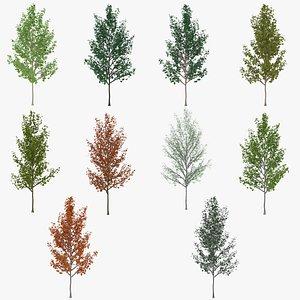 tree 4 3D