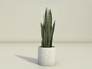 3D snake plant dracaena trifasciata