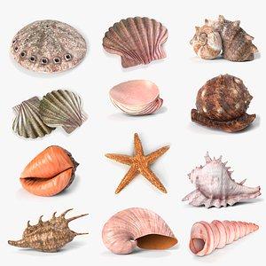 seashell shell sea model