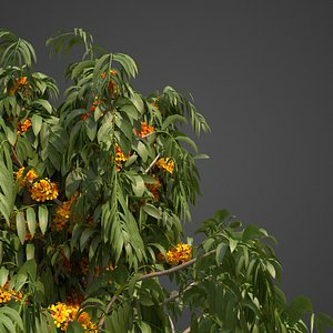 ashoka tree 3D model