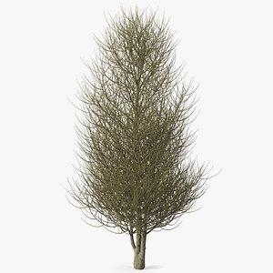 3D laurel bark tree