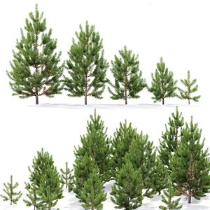 young trees 3D model