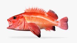 3D yelloweye rockfish juvenile model