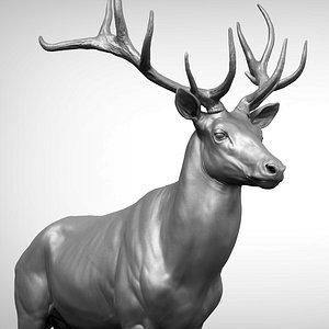 3D Red Deer Stag Elk