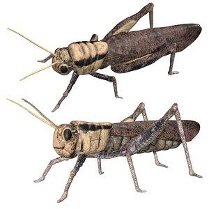 3D Rigged locust model