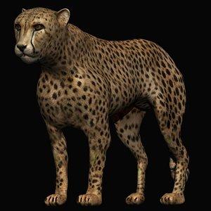 fully rigged cheetah 3D model