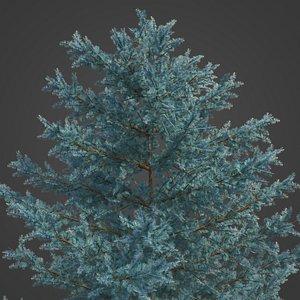 2021 PBR Atlas Cedar Collection - Cedrus Atlantica 3D