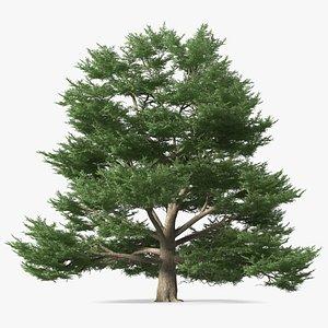 3D Cedrus Libani Big Green Tree