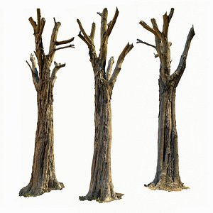 3D model Tree Scan Ultra HQ mesh 10x4k or 4x16k Textures