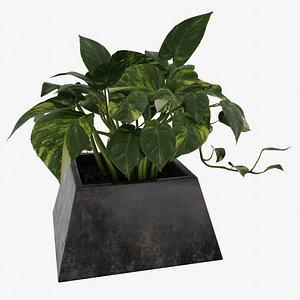 Pothos Plant 3D