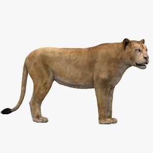 3D Lioness Rigged FUR