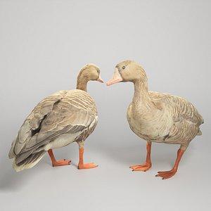 Goose 19 3D model