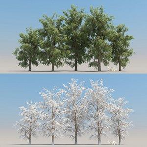 summer robinia tree leaves 3D model