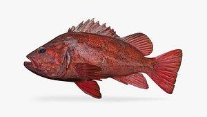 3D vermilion rockfish