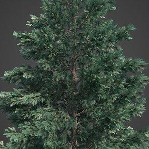 tree 3D model