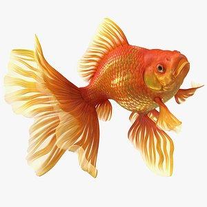 Orange Fancy Fantail Goldfish Swim 3D model