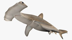 Hammerhead shark 3D model