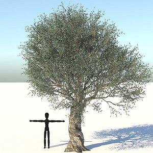 3D ree olive