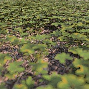 ground clover plants 3D model