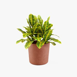 croton plant model