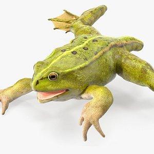 Froglet Rigged for Maya 3D model