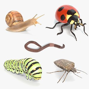 bugs insects snail 3D