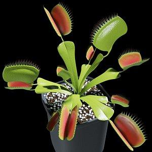 dionaea carnivorous plant venus 3D model