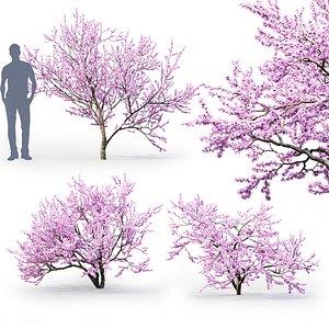 3D bush tree cherry
