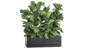 plants interior pots trees 3D model