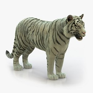 3D WHITE BENGAL TIGER RIGGED XGEN-CORE