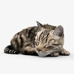 3D Sleeping Cat HD